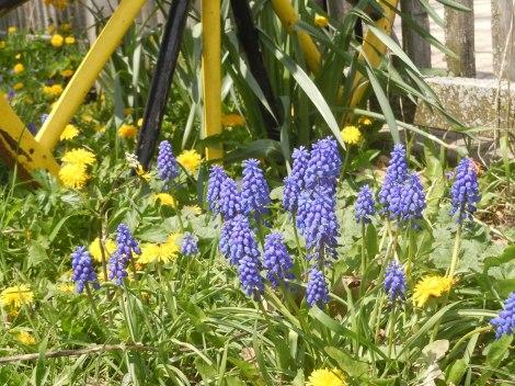 Dandelion Greens Grateful Plains Organics Gran Ridge