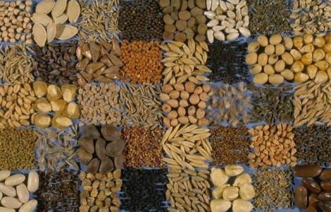 USDA_ARS_seeds