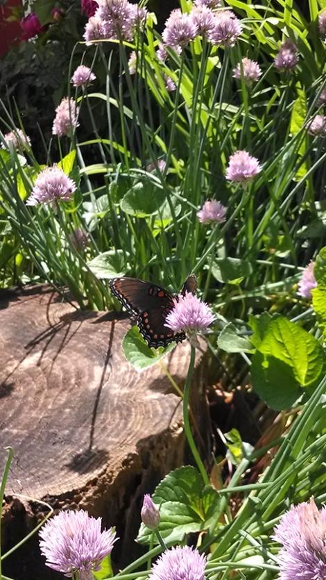 butterflyweb